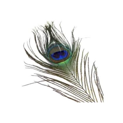 Pfau Augenfeder 1. Wahl Naturgrn  1 St./Pack