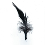 F&M Hahnensattelfeder schwarz