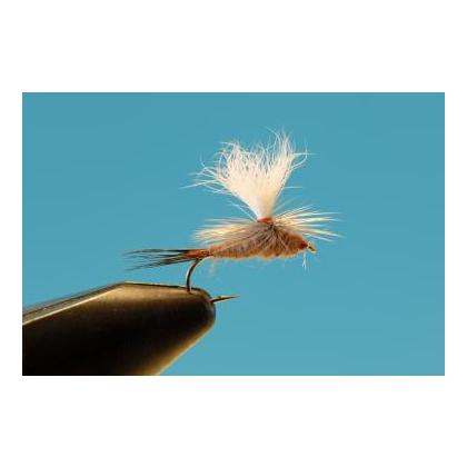 Parachute Mahogany #14