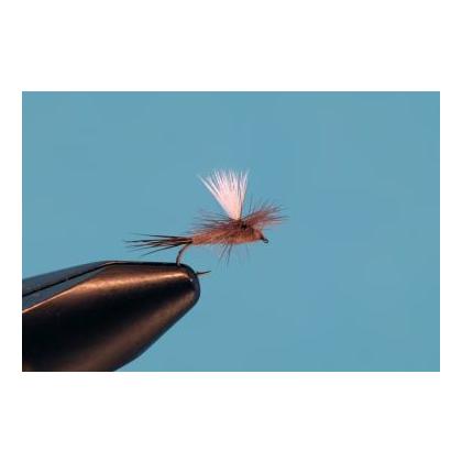 Parachute Mahogany #18