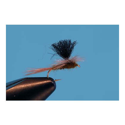 Parachute Flavilinea #16
